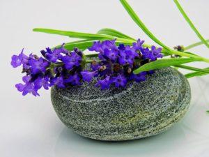 Lavendel2_Traumhaut